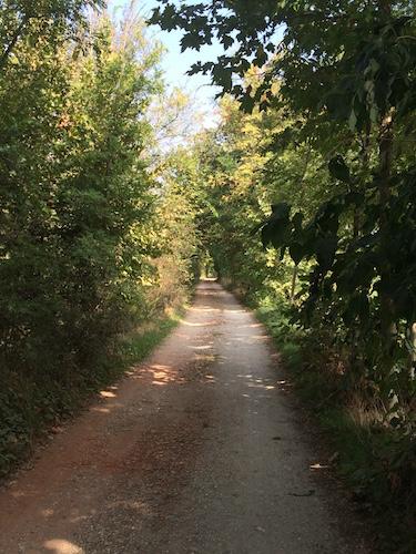 La strada che costeggia la roggia Quinzana e che porta al laghetto da sud